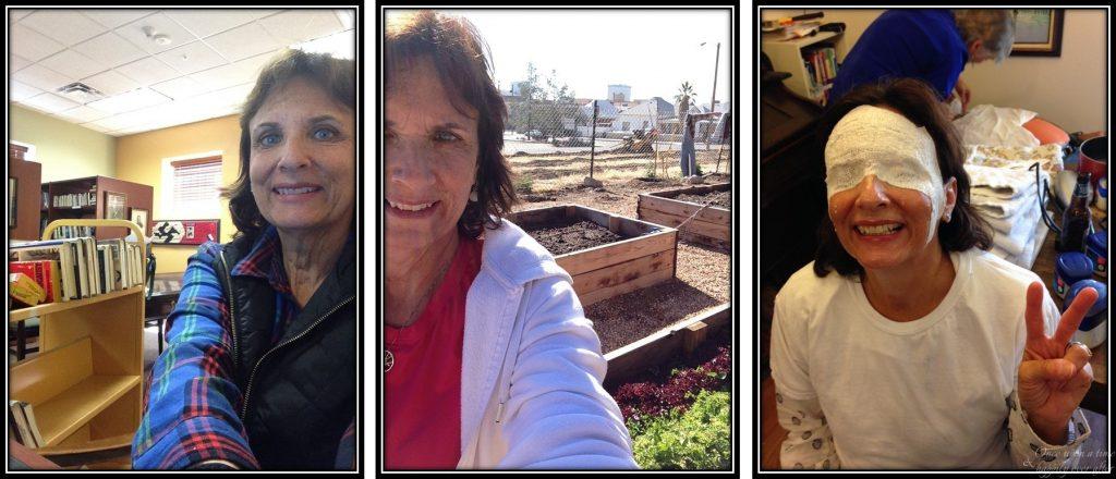 Book cataloger, newsletter writer, master gardener