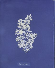 My Fashion Haus: Style Imitating Art, Cyanotype Photography of Anna Atkins